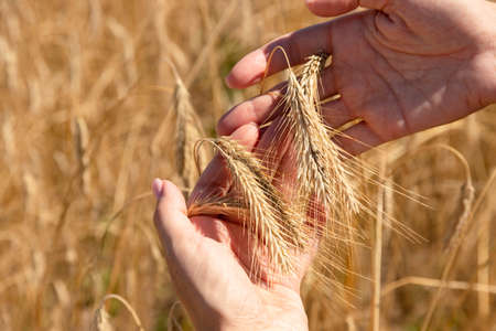 Food security in the world, a global problem, hunger, children must help, poor people need food to live, a hand with a sheaf of wheat.