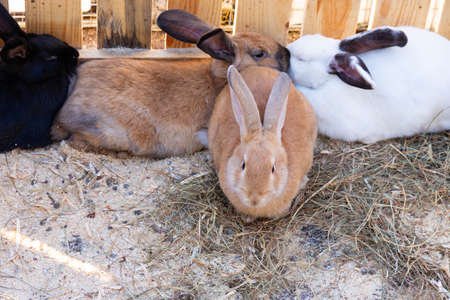 Lots of domestic rabbits on straw bedding.