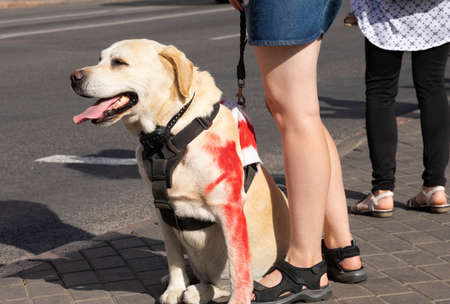 A large dog with red paint on its paw protests against violence against civilians. Concept. Selective focus Archivio Fotografico