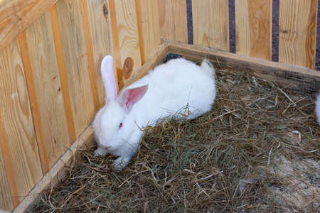 Beautiful rabbit on a bed of salom outdoors. Easter Bunny.