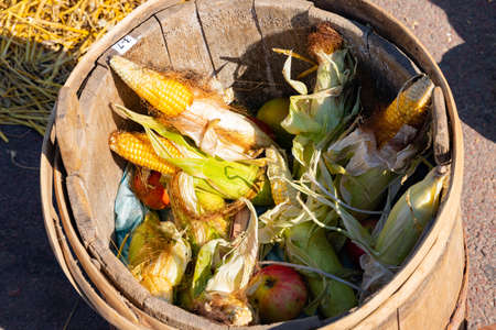 Still life, art, fresh corn and apples lie in a wooden bucket. Harvesting concept. Selective focus. Archivio Fotografico