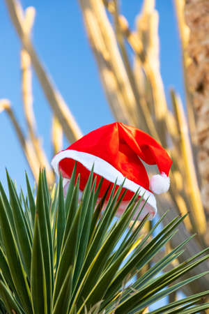 Tropical Christmas and New Year in the desert, oasis. Santa Claus hat on a palm branch.