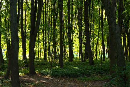Ecological trail in the European city park. Archivio Fotografico - 156536603