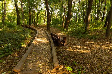 Ecological trail in the European city park. Archivio Fotografico - 156536693