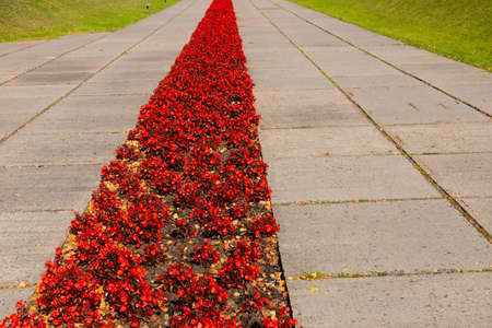 Pedestrian road with a strip of red flowers. The concept of memory, mourning, remember, believe, win.