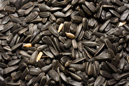 Sunflower seeds. Seeds are scattered all over the surface of the photo. Sunflower seeds close-up