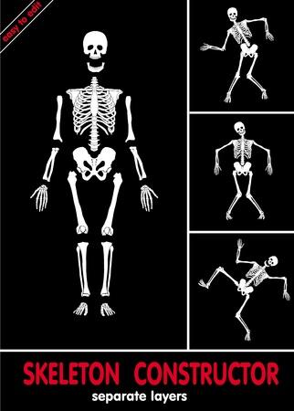 esqueleto humano: Esqueleto humano. Huesos en capas separadas. Fácil de editar
