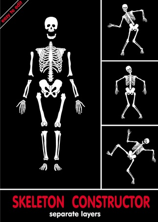 Human skeleton. Bones on separate layers. Easy to edit  Vector