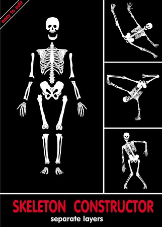 skeleton x ray: Human skeleton. Bones on separate layers. Easy to edit  Illustration