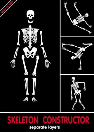 scheletro umano: Scheletro umano. Ossa su livelli separati. Facile da modificare