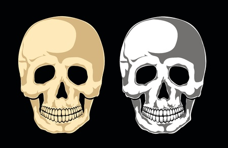Human skull on black. Separate layers Stock Vector - 11407928