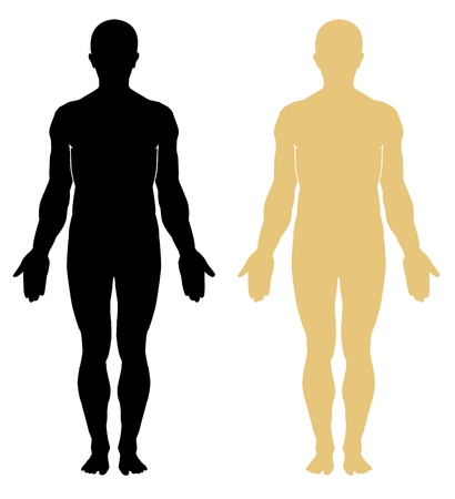 medical study: Silhouette di umano. Maschio Vettoriali