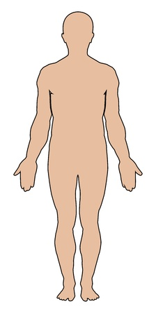 medical study: Silhouette di umano. Vector illustration