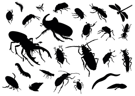 Vector silhouettes of insects Vector