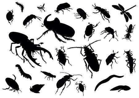 langosta: Vector siluetas de insectos