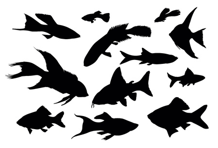 raptorial: Vector fish silhouettes isolated