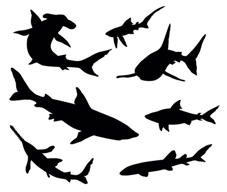 carnivorous animals: Vector silhouettes of sharks