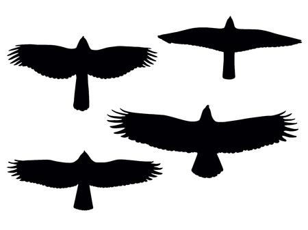 zopilote: Aves de siluetas de orar.