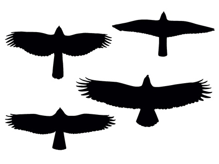 Birds of pray silhouettes.  Vector