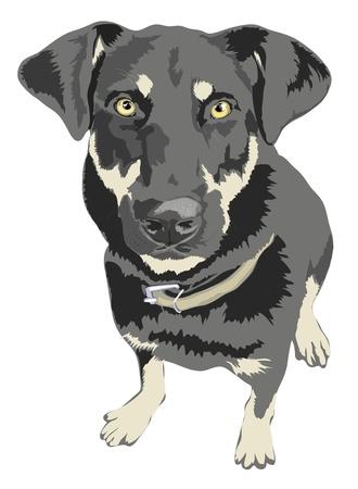 dog bite: Angry cercando cane 5100x6954.