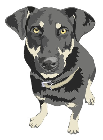 Angry looking dog 5100x6954.  Vector