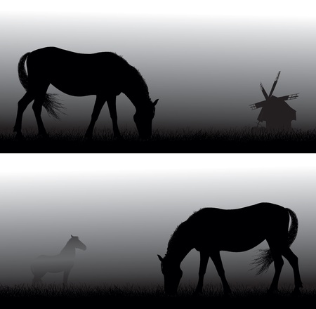 Feeding horse silhouettes  in  fog . Old windmill in background.  Vector