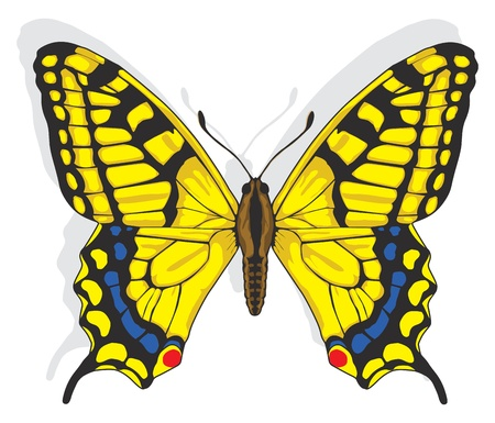 spotted flower: Painted Swallowtail butterfly.  Illustration