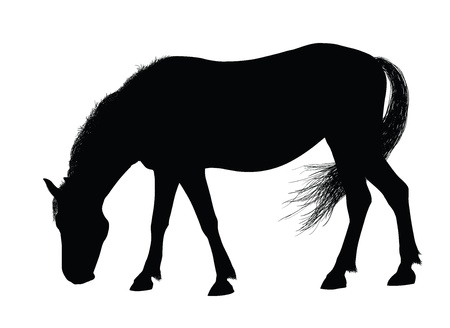 Detailed horse silhouettes collection  Vector eps8 Vector