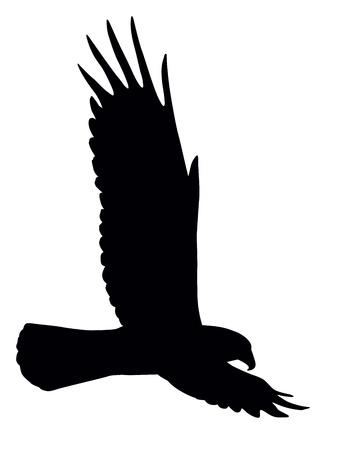 silhouette aquila: Silhouette del volo dell'aquila isolata Vettoriali