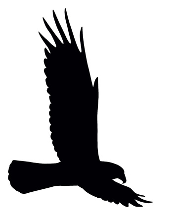Silhouette of flying eagle isolated Vector