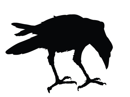 Raven detailed silhouette Vector