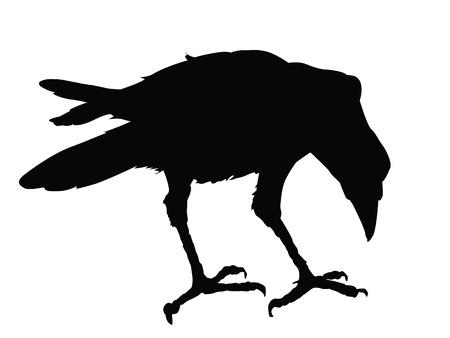 cuervo: Silueta detallada del Cuervo