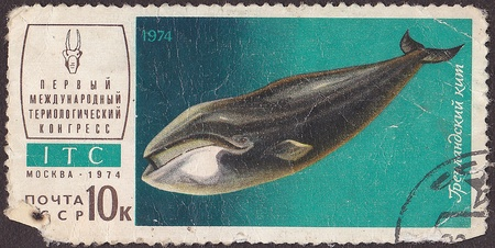 USSR - CIRCA 1974  A post stamp printed in USSR shows Greenland whale, series  First International Congress teriological   circa 1974 Stock Photo - 12851030