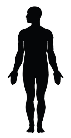 muscular male: Human body silhouette