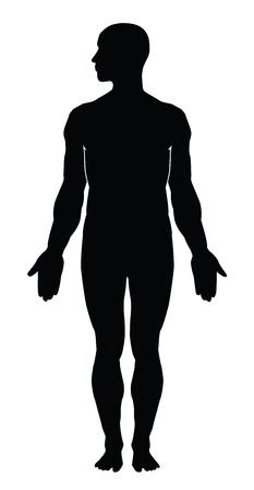 medical study: Silhouette del corpo umano