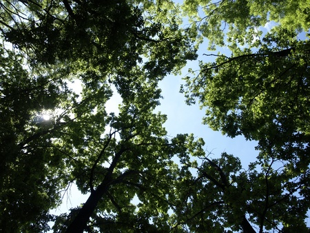 upwards: Green  leaves and sky background