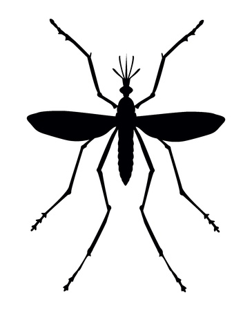 Mosquito silhouette. Close up. Vector