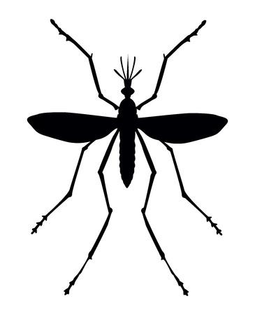 dengue: Mosquito silhouette. Primo piano.