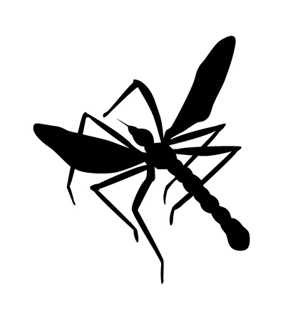 dengue: Mosquito silhouette. Close up.