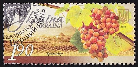 UKRAINE - CIRCA 2011  A post stamp printed in Ukraine shows grapes Traminer ,series Winemaking in Ukraine , circa 2011  photo