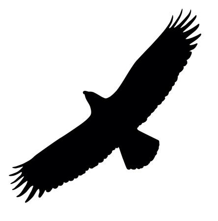 orzeł: Sylwetka orła z rozpostartymi skrzydłami latający Ilustracja