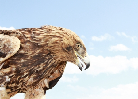 Eagle head on blue sky background  Close up Stock Photo - 14205158
