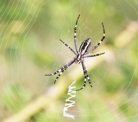 Spider on his web  Close up  Animals theme Stock Photo - 14488792
