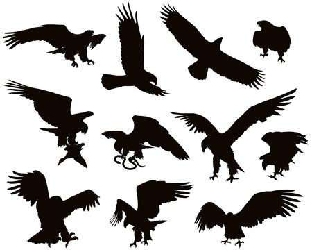 silhouette aquila: Caccia aquila dettagliate
