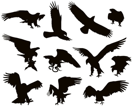 aguila volando: La caza del �guila detallan Vectores