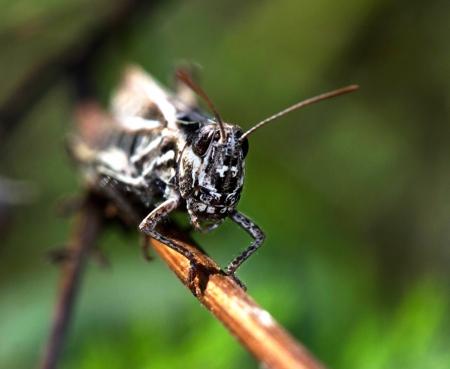 Grasshopper  on nature background  Close up  Animals theme Stock Photo - 15165748