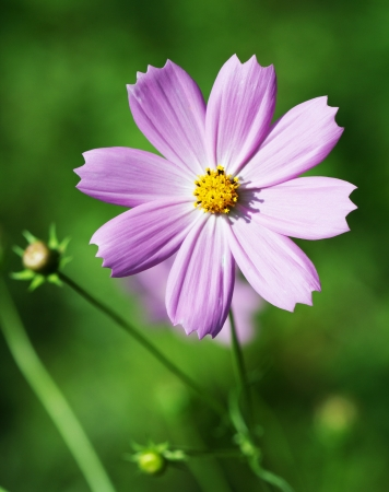 rotated: Flower close up. Nature background