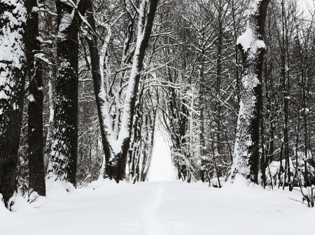 neige qui tombe: Winter park alley