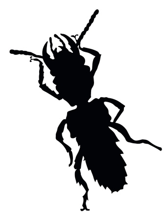 Insect isolated  Vector silhouette Stock Vector - 18875099