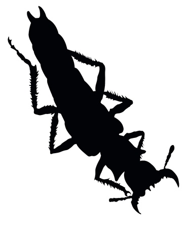 Insect isolated  Vector silhouette   Vector